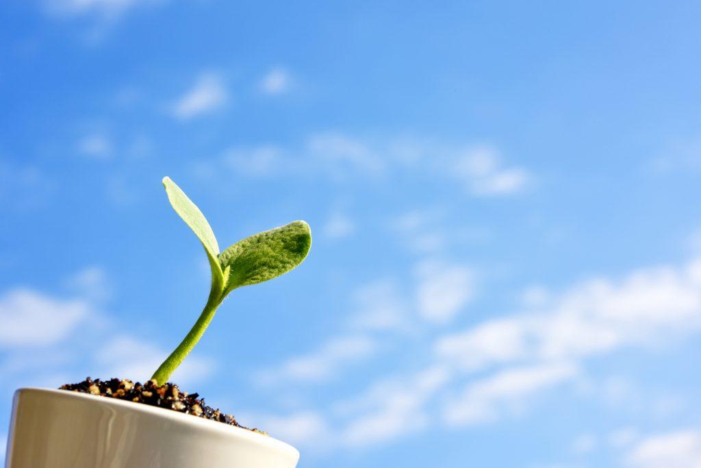 中学技能教科「技術」攻略、「生物育成」技能についての基礎知識