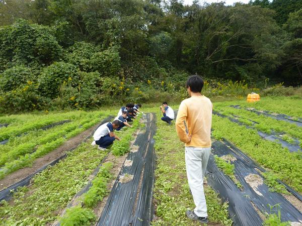 農業体験をする生徒たち